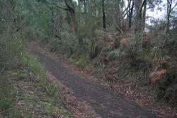 Start of the rail trail at Maggios Road