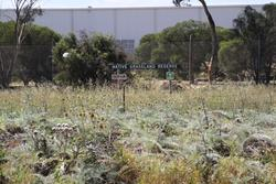 Native grassland reserve beside the tracks at Forsyth Road